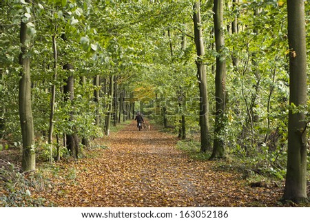 Man walking the dog in the autumn forest - stock photo