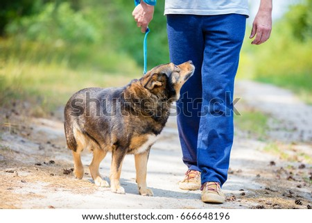 Man walking with a dog on dirt road in summer