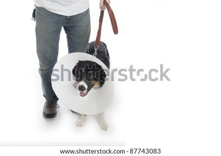 Man walks his dog in a protective cone - stock photo