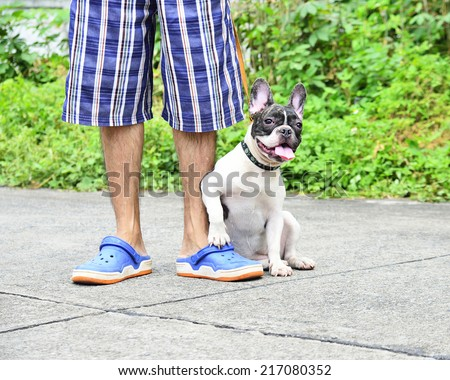 Man with his dog  (French Bulldog)  in the street   - stock photo