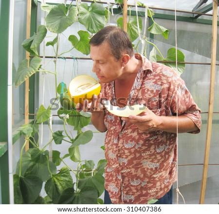 Man  with  ripe yellow garden melon - stock photo