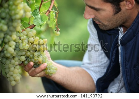 man working in a vineyard - stock photo