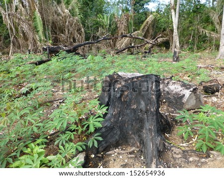 Manaus, 7 March 2013. Destroyed tropical rainforest in Amazonia, Brazil - stock photo