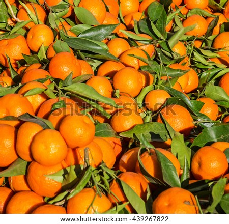Mandarins, tangerines fruits bunch with leafs in Tanger market, Morocco - stock photo