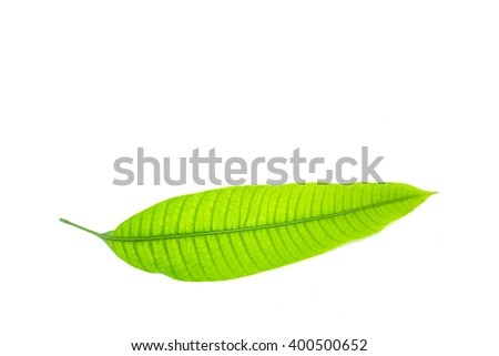 Mango leave isolated on white background