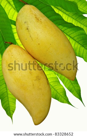 mango ripe yellow and leaf green on a white background. - stock photo