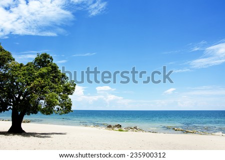 Mango Tree on the Beach on a Sunny Day, Chintheche Beach, Lake Malawi, Africa - stock photo