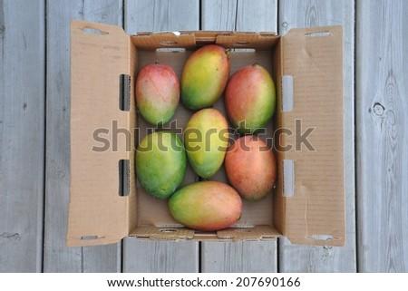 Mangoes  - stock photo