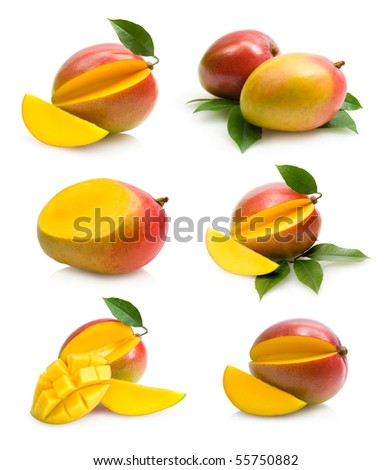 mangoes collection - stock photo