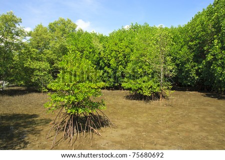 Mangrove and Roots, Janthaburi Province, Thailand - stock photo
