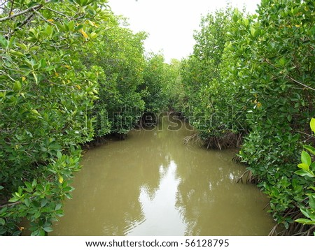 Mangrove forest (2) - stock photo