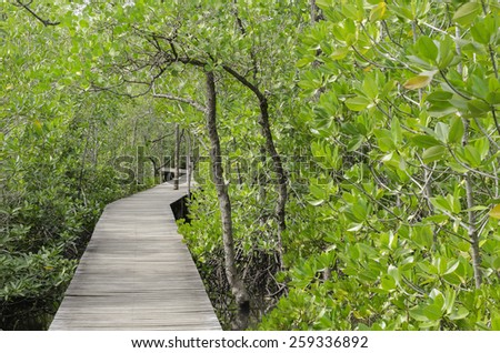 Mangrove forest and walkway is The National park that a famous place in Chanthaburi province of Thailand. - stock photo