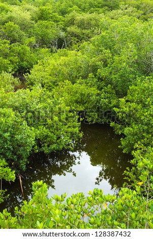 Mangrove forest and water in Florida seen from above - stock photo
