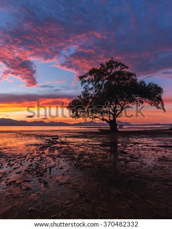 Mangrove forest and wonderful sky - stock photo