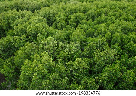 Mangrove forest at Prachuap Khiri Khan province , Thailand. - stock photo