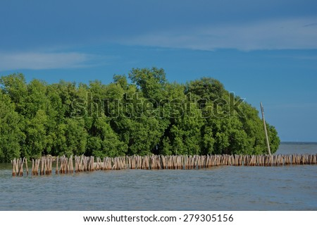 mangrove forest background - stock photo