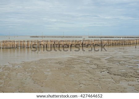 mangrove forest, bamboo barrier for protection coastline wave