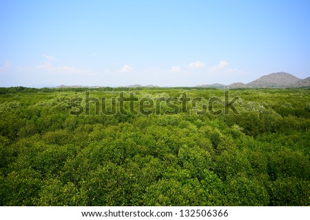 Mangrove Forest by Aerial View - stock photo