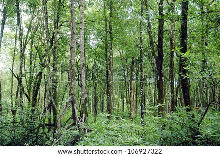 mangrove forest conservation area - stock photo