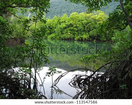 Mangrove Forest, Daintree Rainforest, Queensland, Australia - stock photo