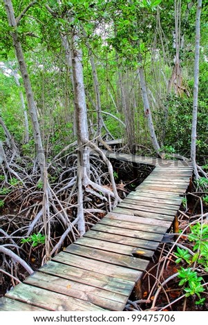 Mangrove forest in Colombia - stock photo