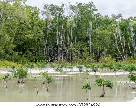 mangrove forest in Florida (USA) - stock photo