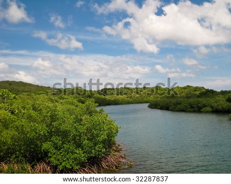 Mangrove Forest in Roatan, Honduras. - stock photo