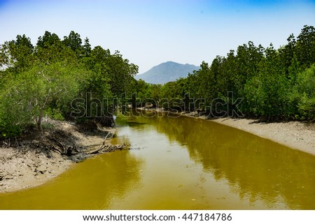 mangrove forest in sunny day  - stock photo