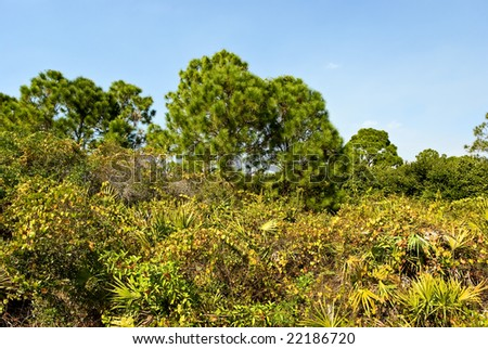 mangrove forest on the water, Florida - stock photo