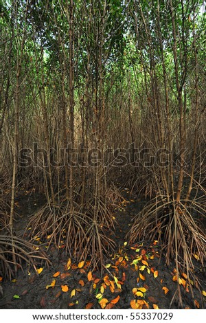 mangrove forest, thailand - stock photo