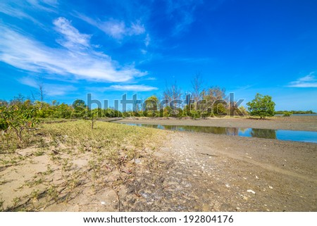 Mangrove forest tropical rainforest blue skyfor background design Thailand - stock photo