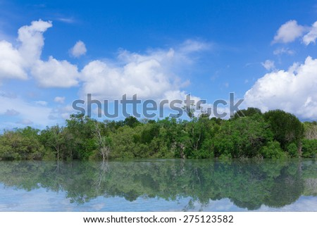 Mangrove forest with blue sky background - stock photo