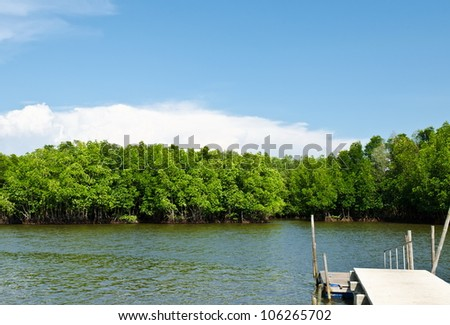 Mangrove forest with blue sky field. - stock photo