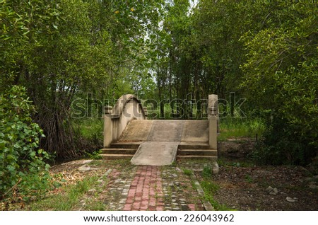 Mangrove forest with bridges, concrete Walkway - stock photo