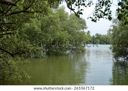 Mangrove forests and canals in Thailand - stock photo