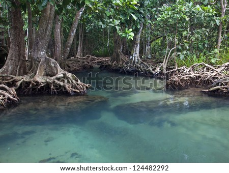 Mangrove forests ( swamp ) with river - stock photo