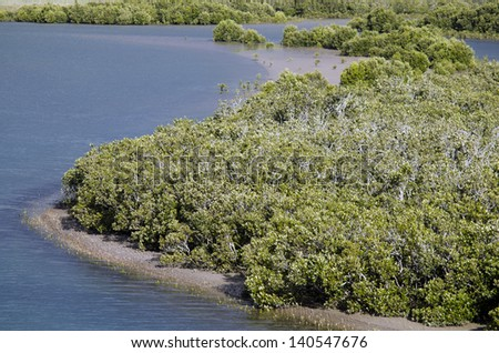 Mangrove grows along a river in Northland New Zealand. - stock photo
