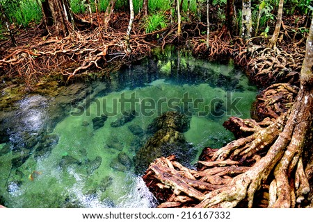 Mangrove root in emerald pond Krabi Thailand - stock photo