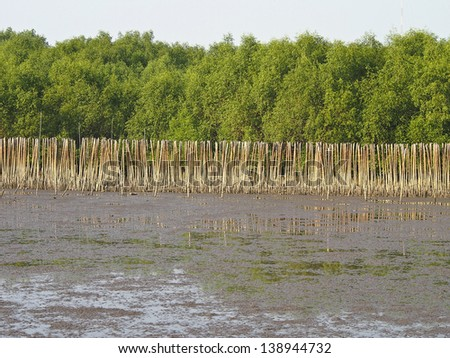 mangrove shoreline at low tide time in daylight - stock photo