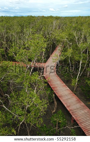 mangrove trail - stock photo
