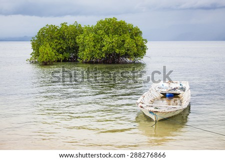Mangrove tree and boat in water - stock photo