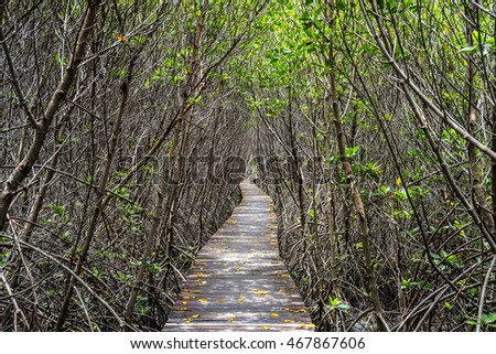Mangrove tree in Thailand