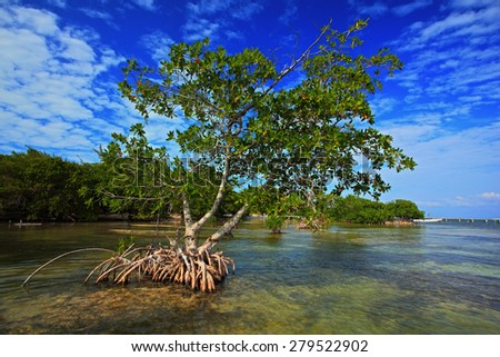 Mangrove tree islet viewed from the water surface, Belize, Central America - stock photo