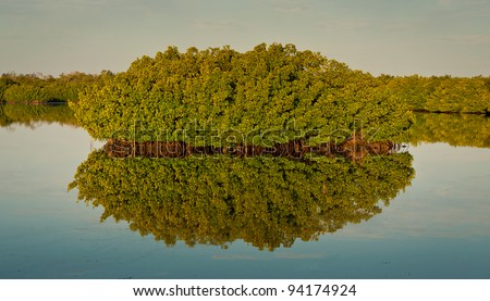 """Mangrove tree reflected in the water at the J.N. """"Ding"""" Darling National Wildlife Refuge in Sanibel Island, Florida - stock photo"""