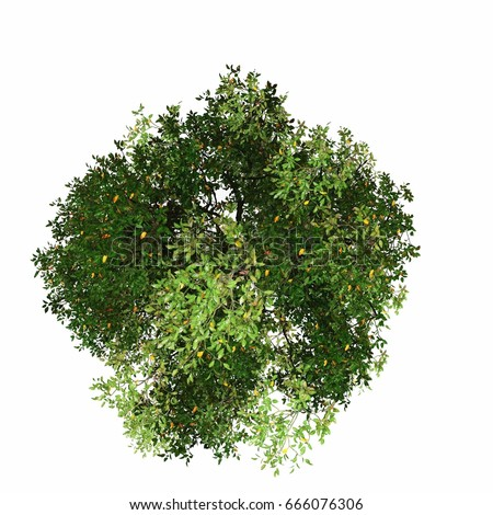 Tree Top View Stock Images Royalty Free Images Amp Vectors