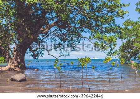Mangrove trees and their roots growing from water. Philippines. - stock photo