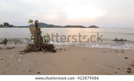 mangrove trees by stumps dead of  in background sea   - stock photo