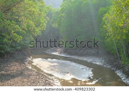 mangrove trees in pranburi thailand. - stock photo