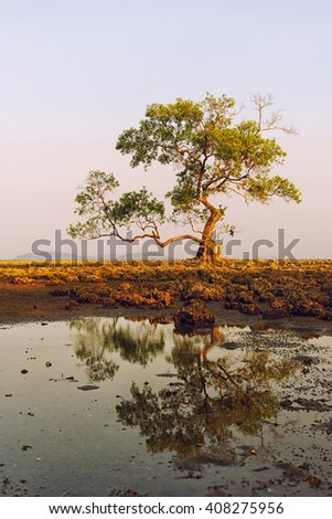 Mangrove trees in sunset time - stock photo