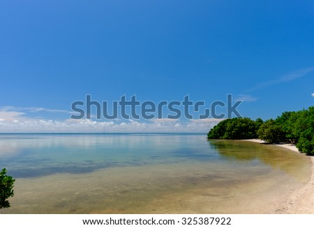 Mangrove trees line the shore of a sandy and shallow beach with the Keys signature crystal clear waters - stock photo